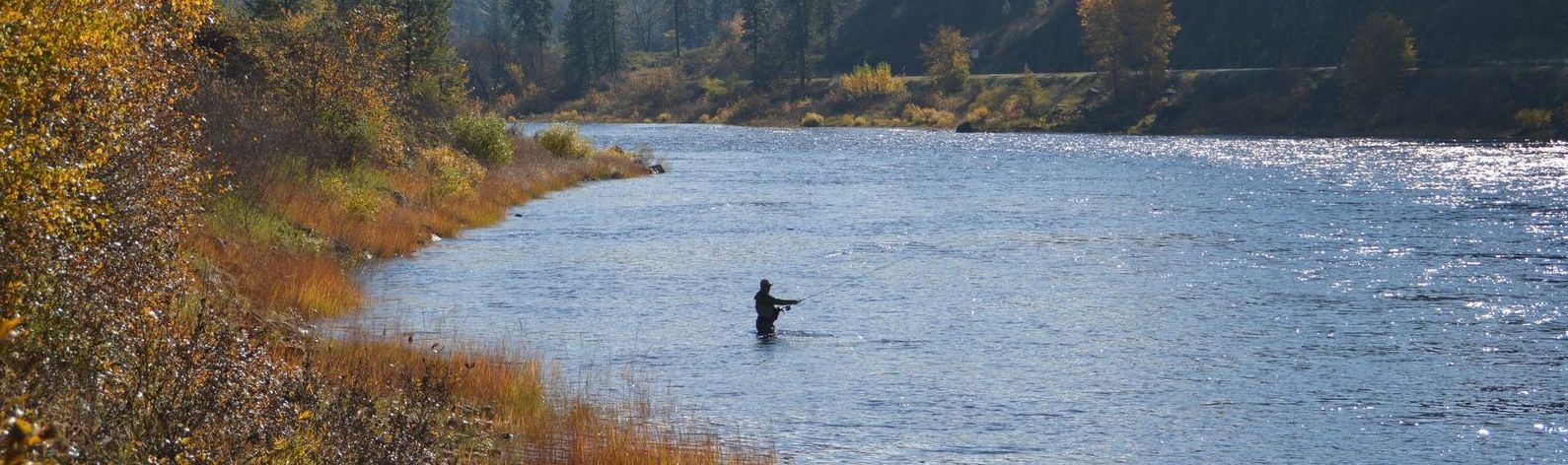 Restore Our Salmon and Steelhead