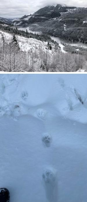 lion_hunt_collage.jpg