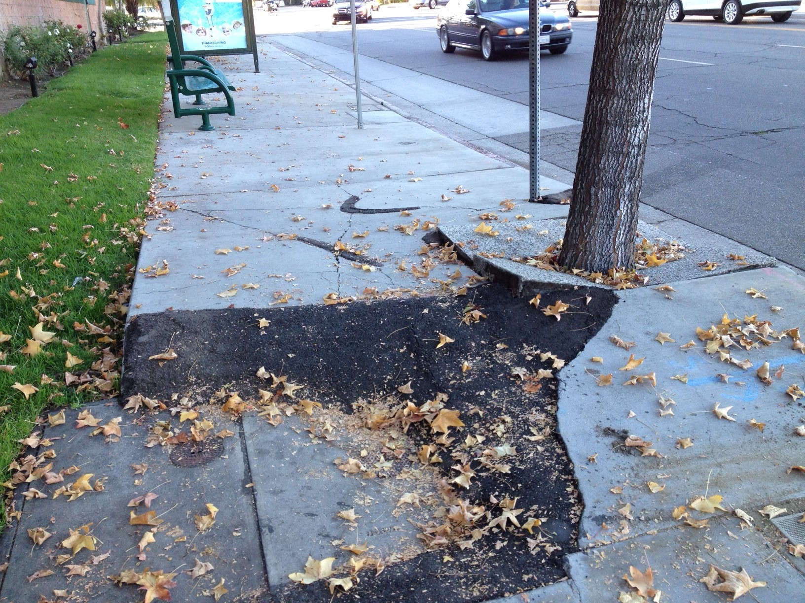 Uprooted sidewalk in Woodland Hills. Bureau of Street Services has previously estimated that 40% of the system or 4,620 miles is in disrepair, with a majority of the disrepair caused by tree roots.