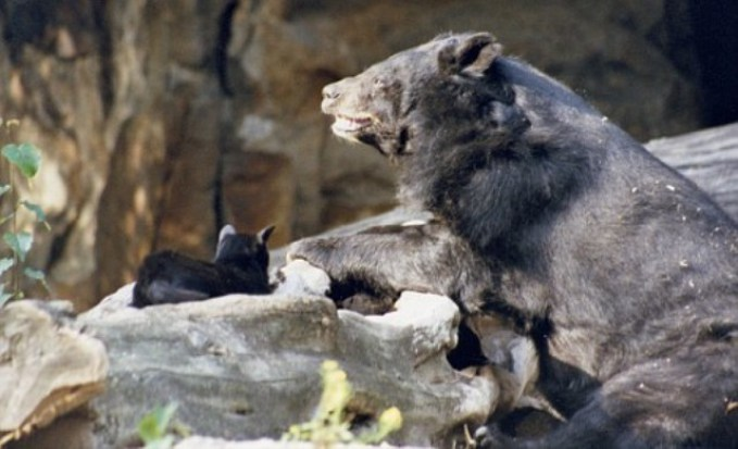 bear-and-cat-friends.jpg