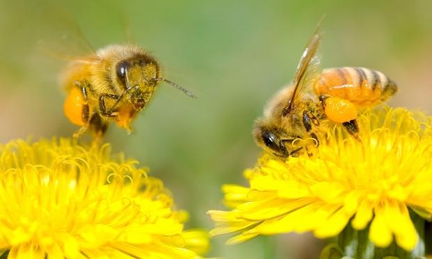 Bees060x1236.jpeg