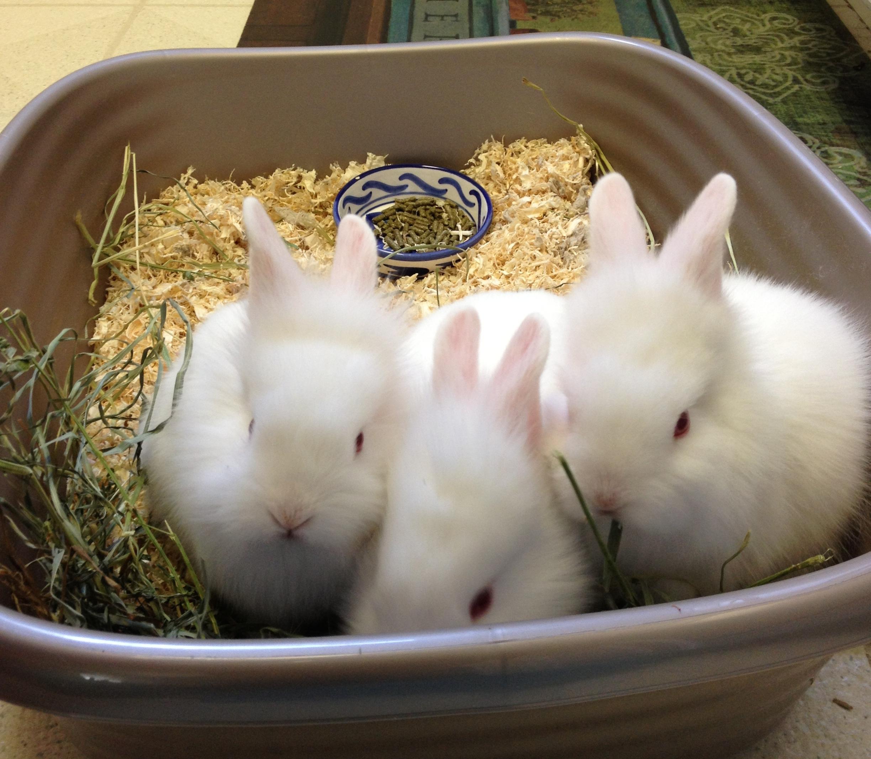 3_bunnies.jpg