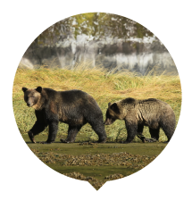 mama-grizz-cub-beachwalk-thumbnail.png