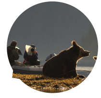 Bears-Forever-Website-Images-Ecotourism-Rev1.jpg