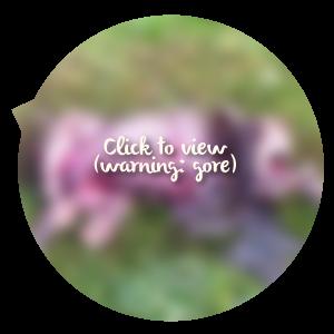 Cheeky-carcass-blur.png
