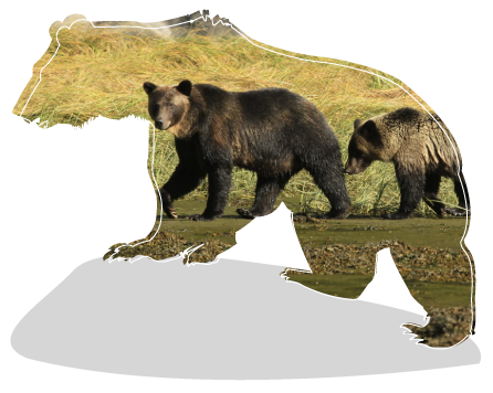 bears-donation-page.png