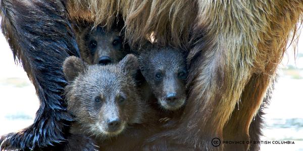 three-cubs-mom-legs.jpg