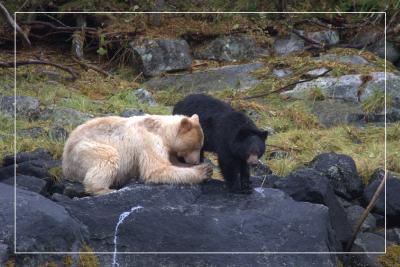 bears-in-prayer.jpg