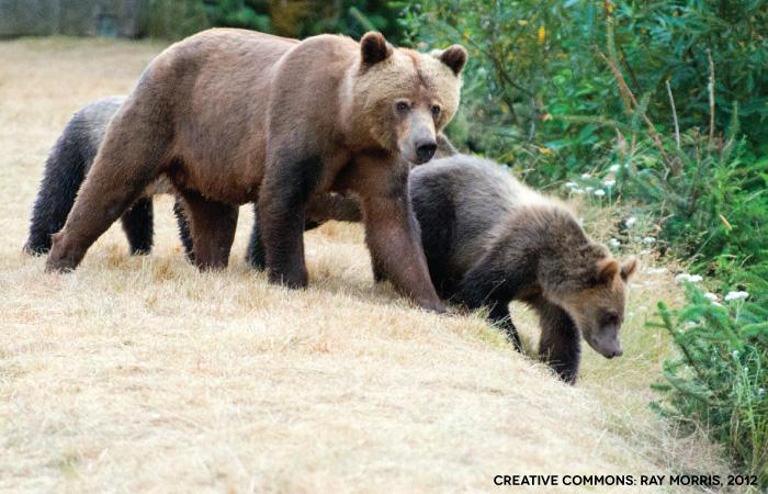 BearShare-RayMorris.jpg