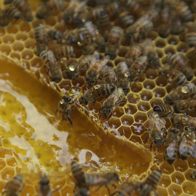 Honey's boring - here's how to cook with bee larvae!