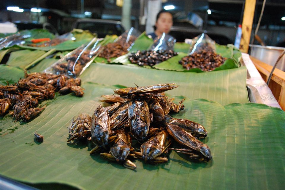 Giant Water Bugs at the market