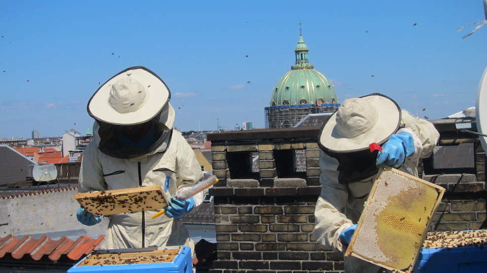 Urban Beekeepers of Copenhagen