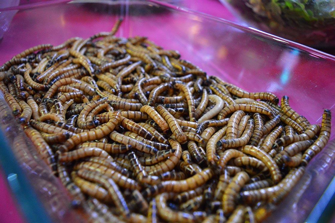 mealworm.jpg