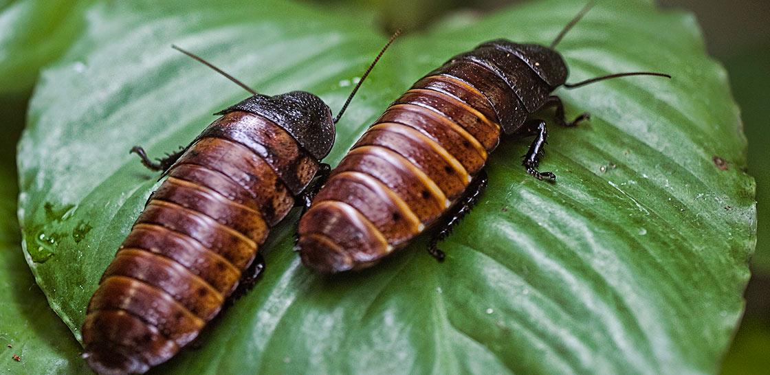 cockroaches2.jpg