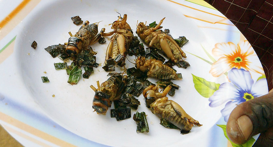 Fact check: Are insects better for you than meat?