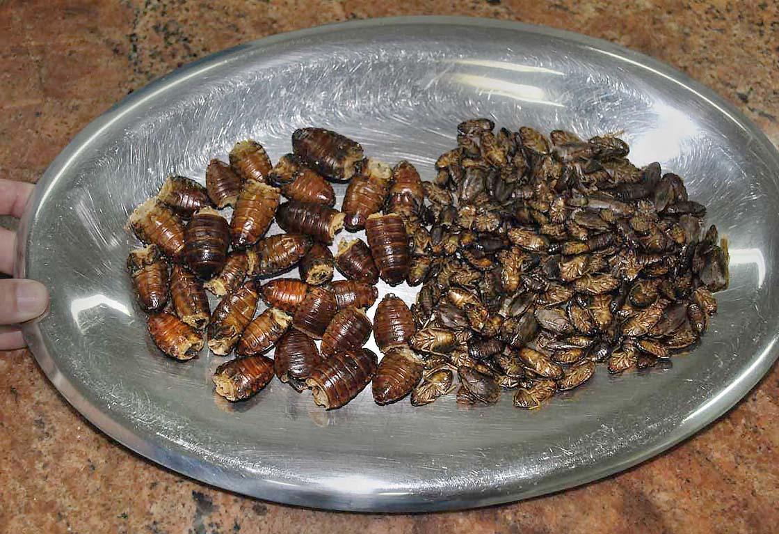 cockroach_plate.jpg