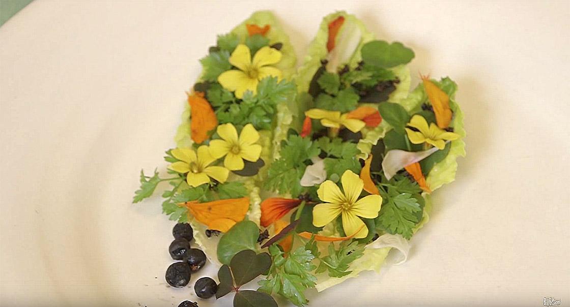 Roberto Flores vilde urter, honning og myrer