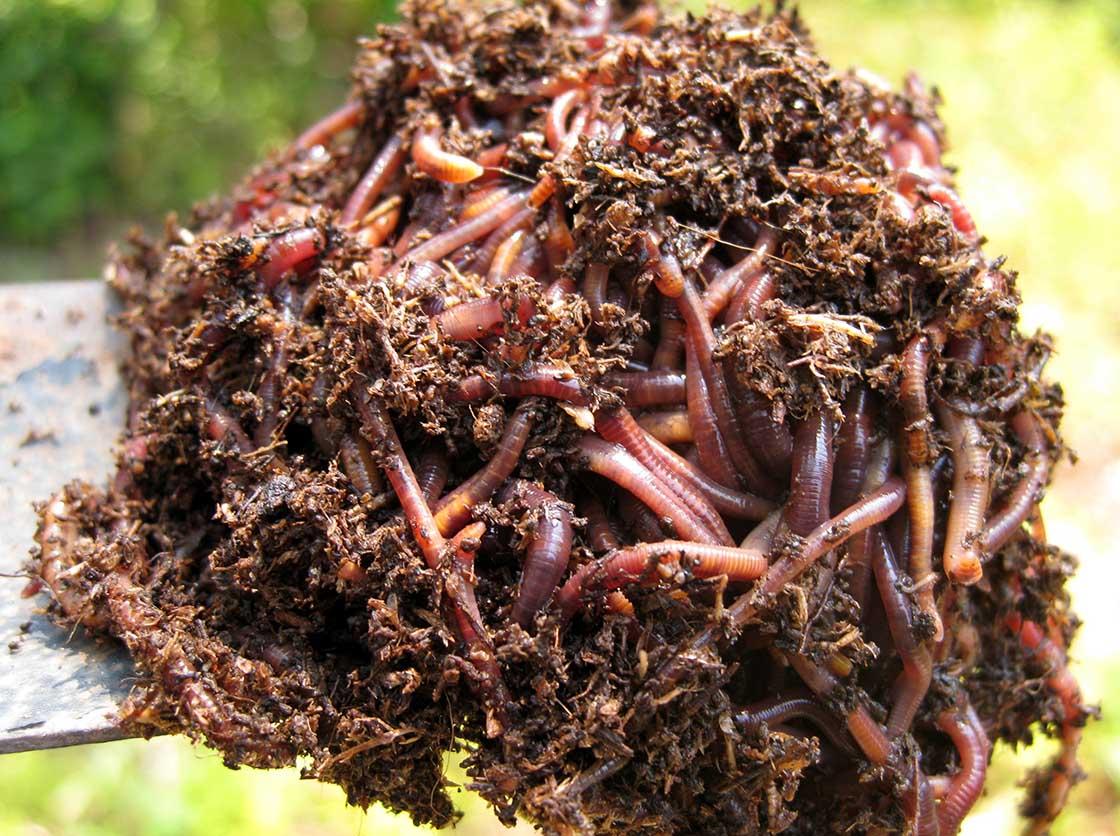 earthworms_spate.jpg