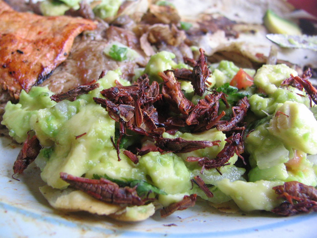 Chapulines – Mexican Grasshoppers