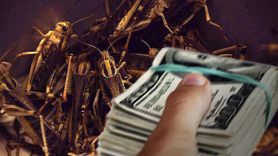 cricket_money.jpg