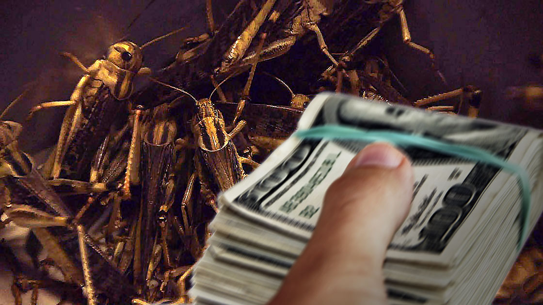There's money to be made with edible insects