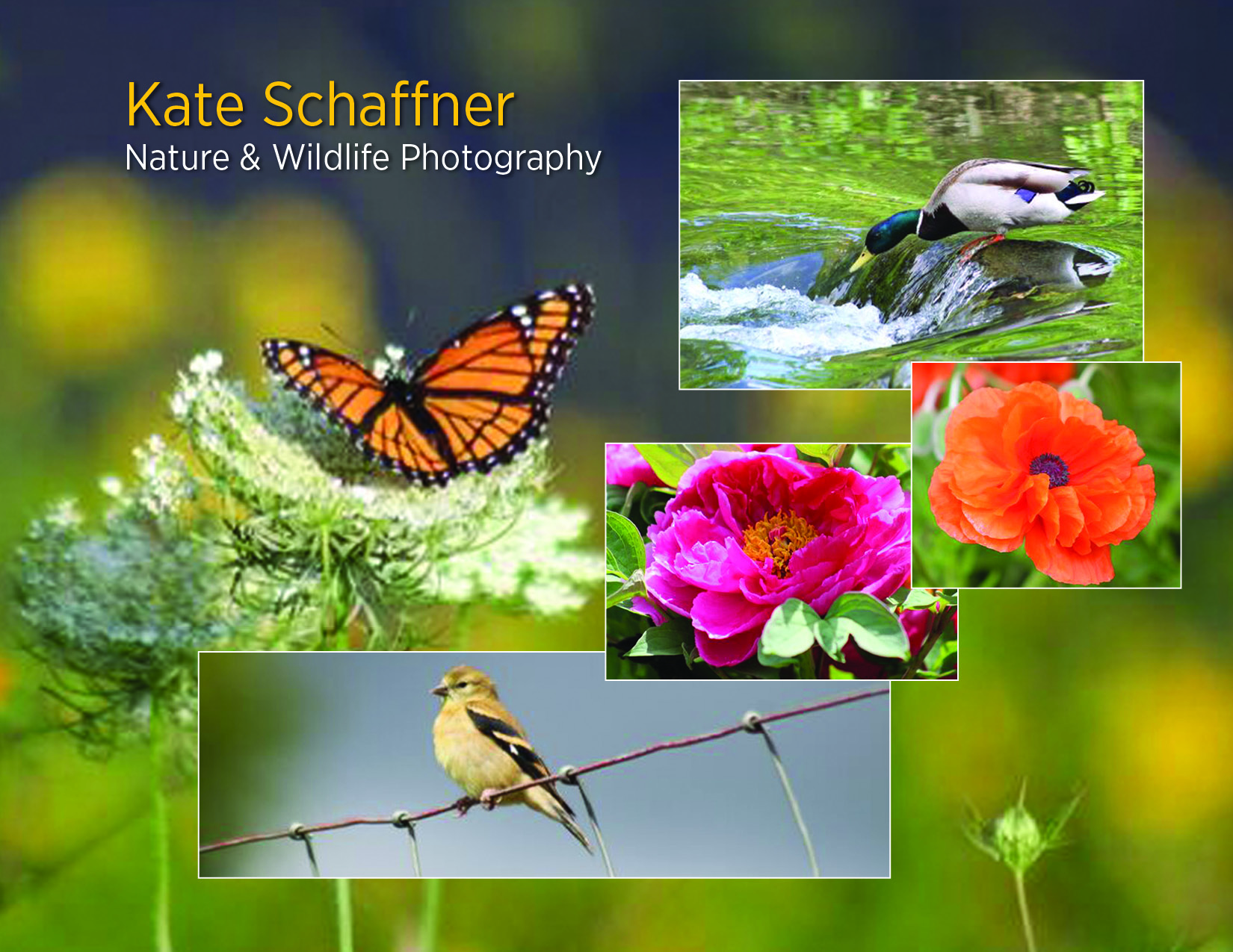 Kate Schaffner Nature & Wildlife Photography