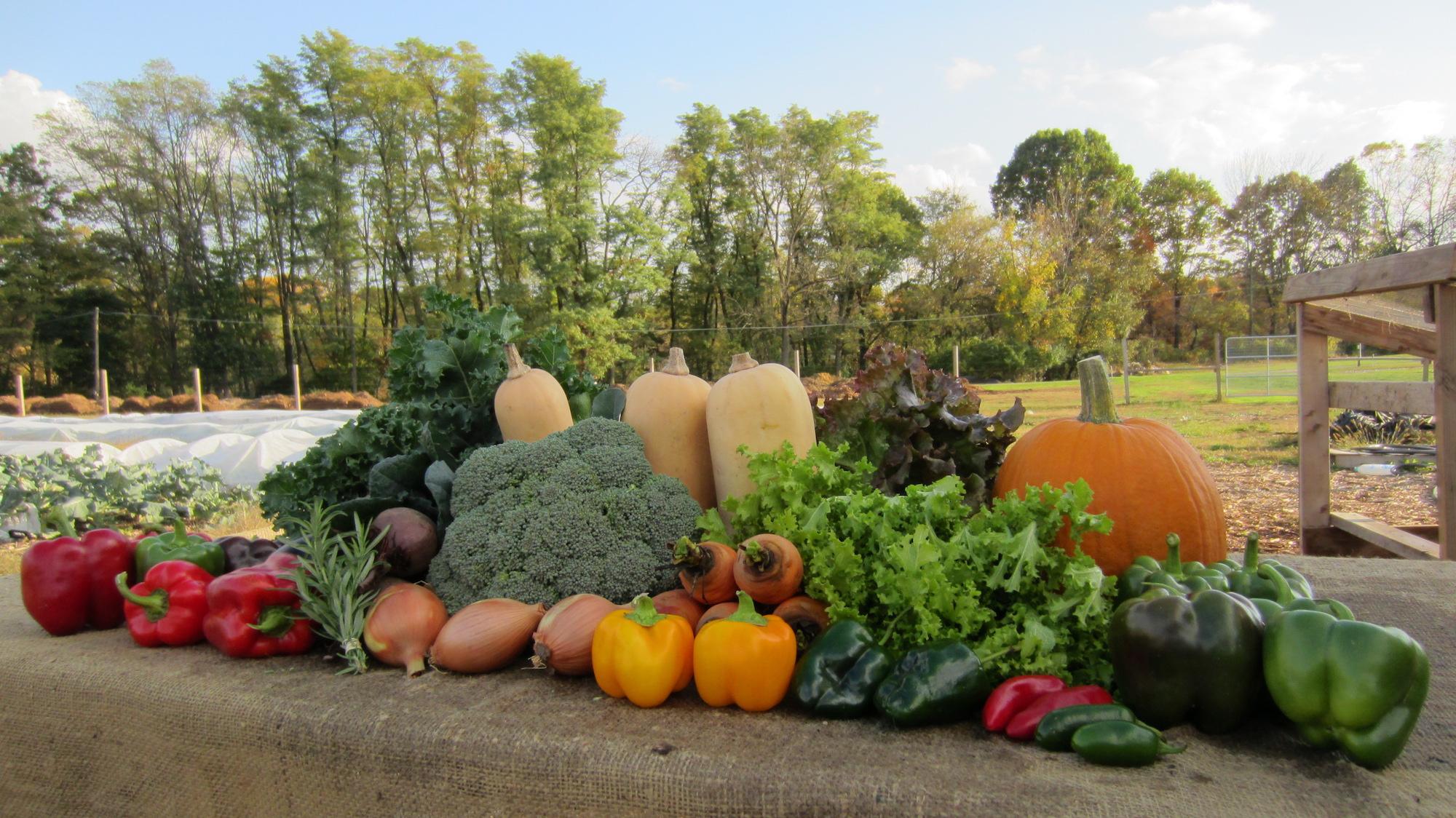 Monocacy Farm Project Produce