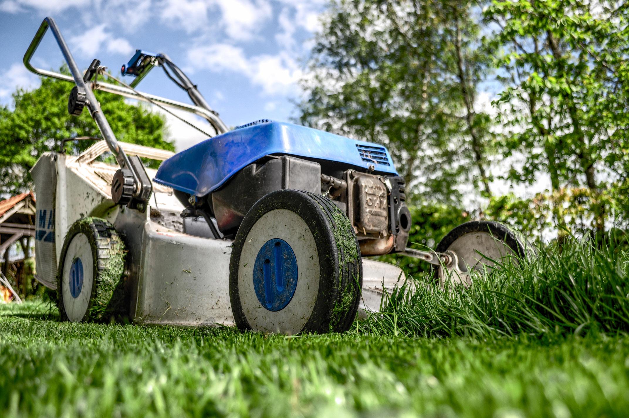 garden-grass-meadow-green.jpg