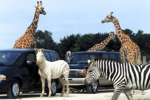 African_Safari_Wildlife_Park.jpg