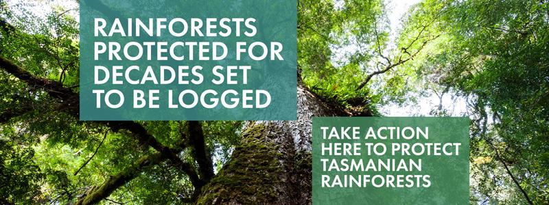 BBF_Rainforests_2017_RainforestReserves_NBBlog600px_Draft_01.0.jpg