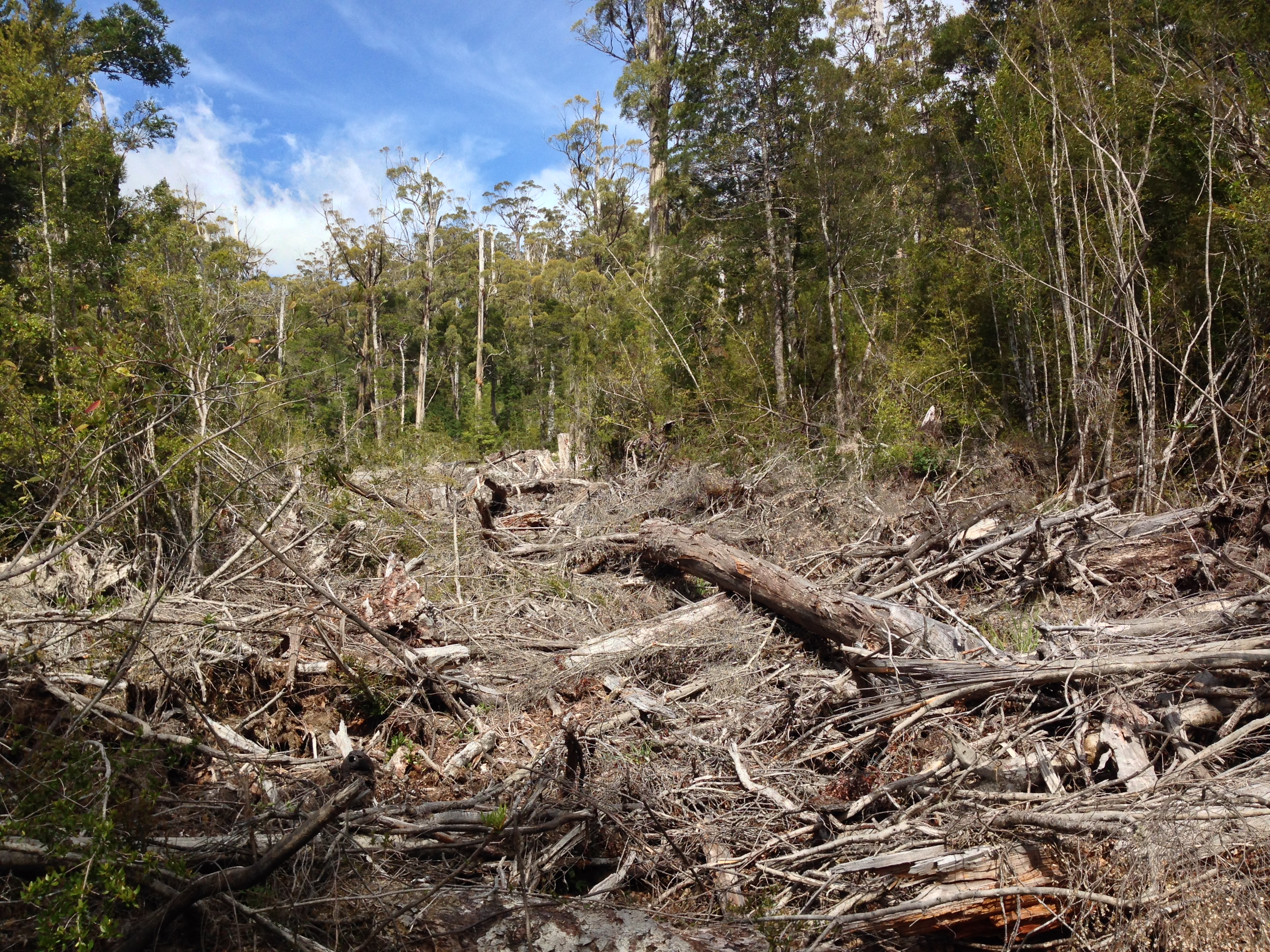 Logging Area number 3 in Coupe EP048C Photographed 18.11.15. Photography Jenny Weber