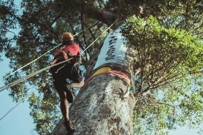treeclimber_01.jpg