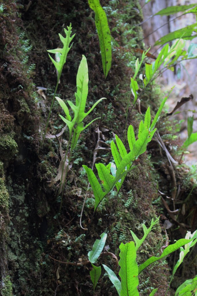 Epiphytes_and_mosses_small.jpg