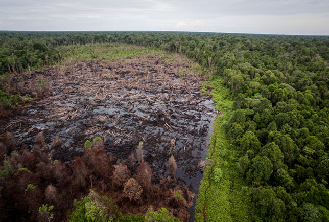 Palm-oil development destroys peatland forest, Singkil Swamp, Indonesia. The habitats of orangutans, elephants and tigers have been destroyed; vast peat swamps have been drained and burnt. Photo courtesy Rainforest Action Network.