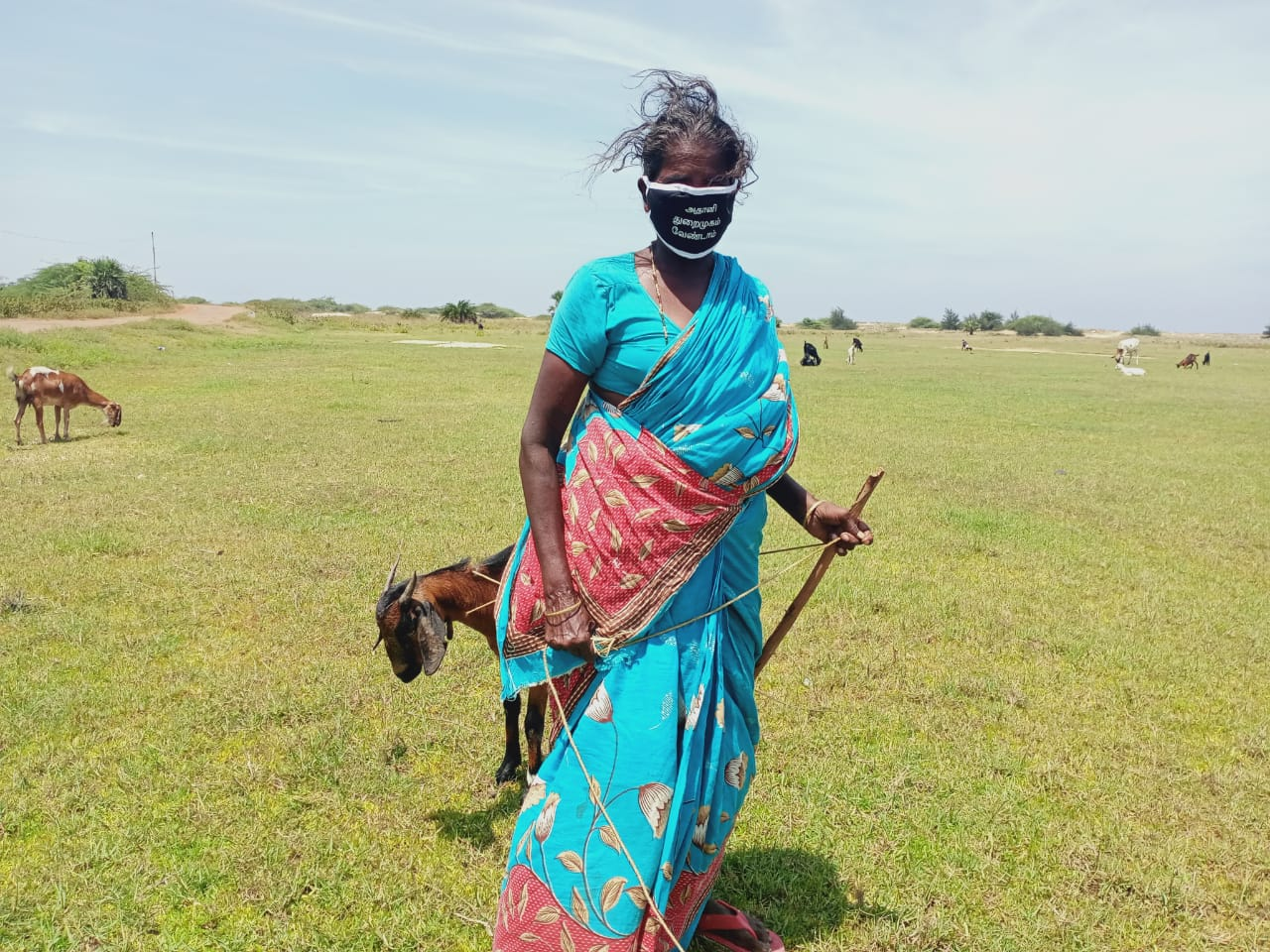11. Where water ends and land begins lie acres of croplands and grazing commons. Goats are low-maintenance livestock that can be sold in a pinch for ready cash. The western edges of the Ennore-Pulicat wetlands boast a vibrant women-centred cattle economy.
