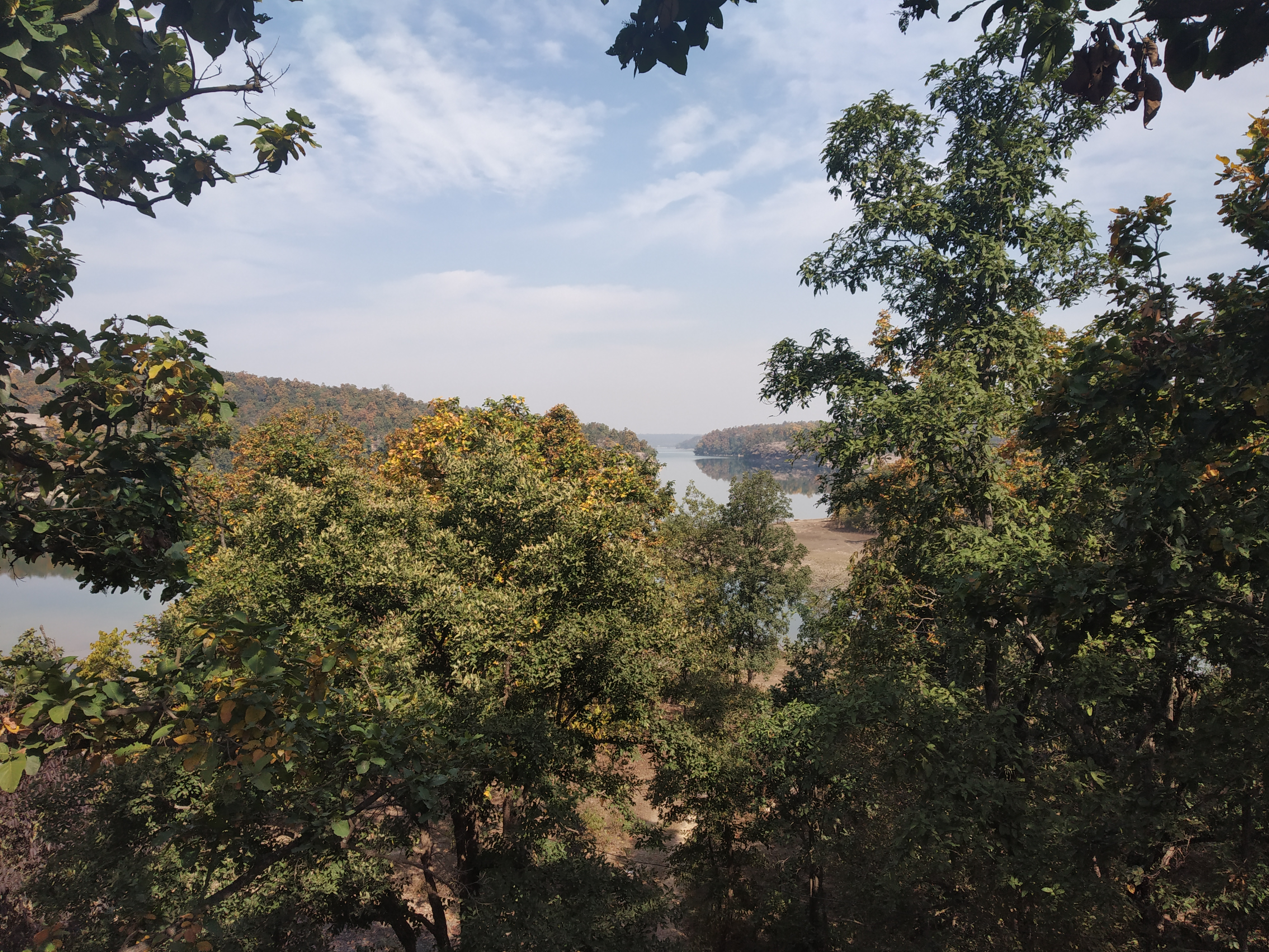 Hasdeo Aranya forests - ancestral lands of the Gond people and elephant habitat.