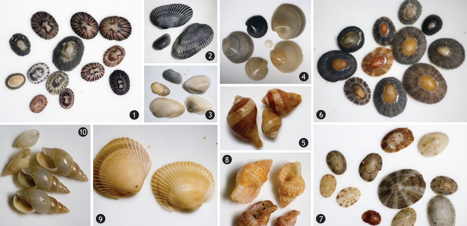 Some of the shell-fish species documented in the Vizhinjam area.