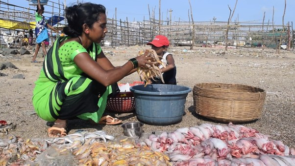 A local fisherwoman harvesting prawns - a dying industry? Photo Shiva Thorat