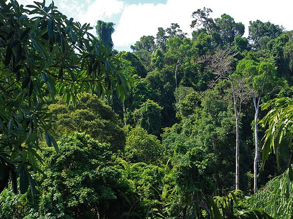 Will forests like this in the Andaman and Nicobar Islands be destroyed for plantations of oil palm? Photo Pinterest