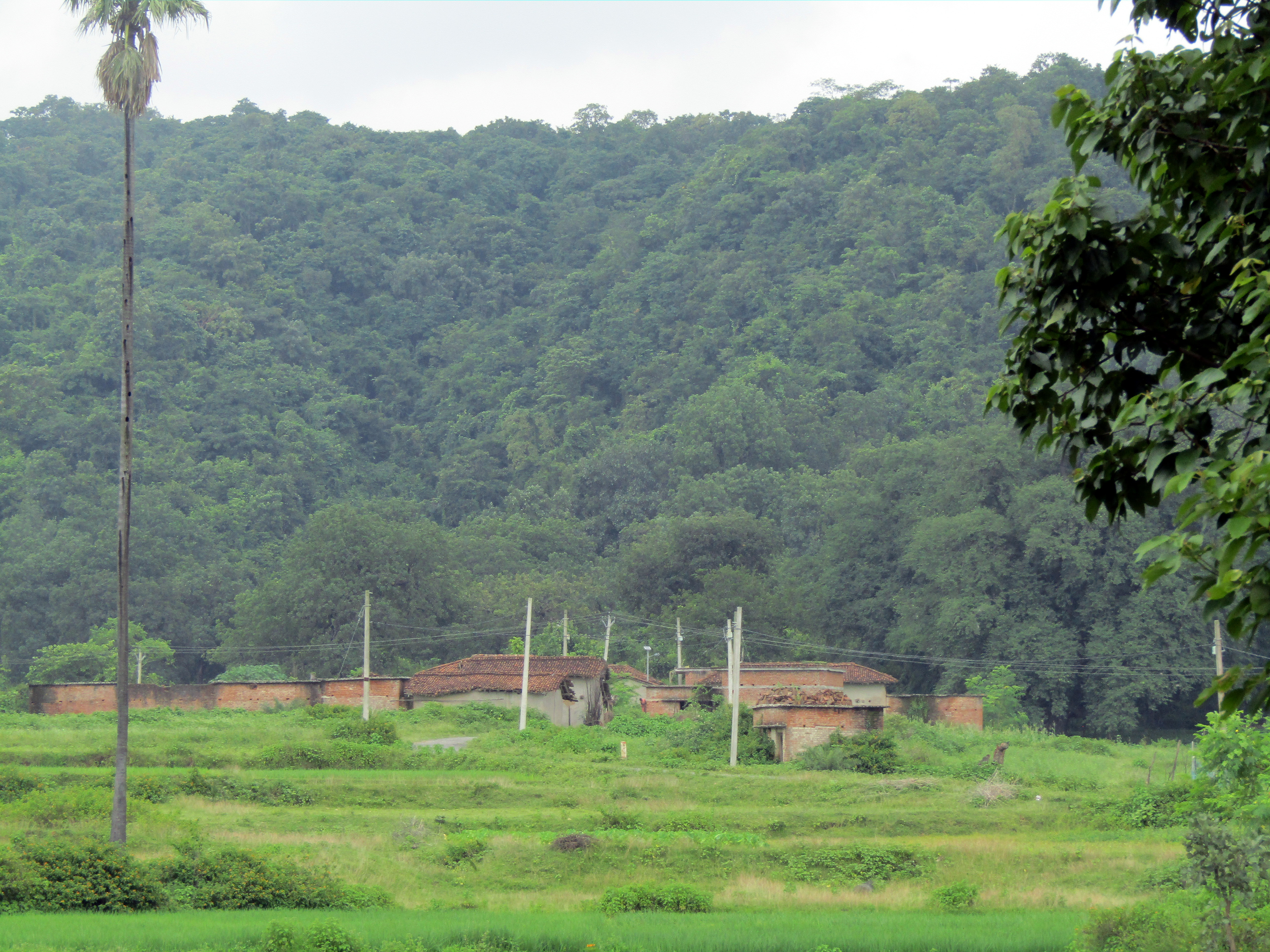 Jharkhand forest, farmland and villages in the path of Adani's next big coal mine
