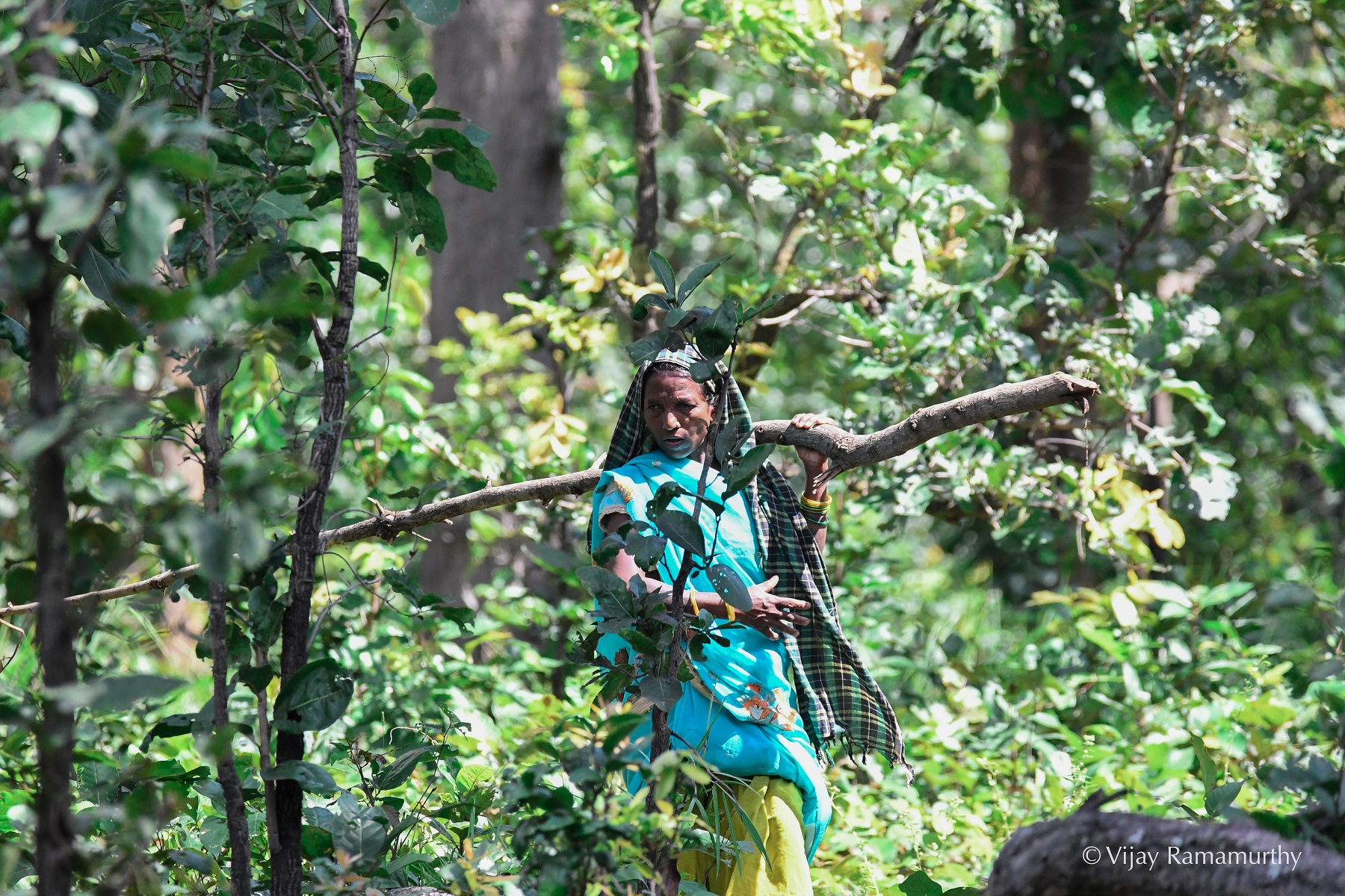 The Adivasi of the Hasdeo have coexisted with the forest since time immemorial. Photo V. Ramamurthy