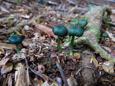 Kate_Case_-_RD019A_Fungi.jpg