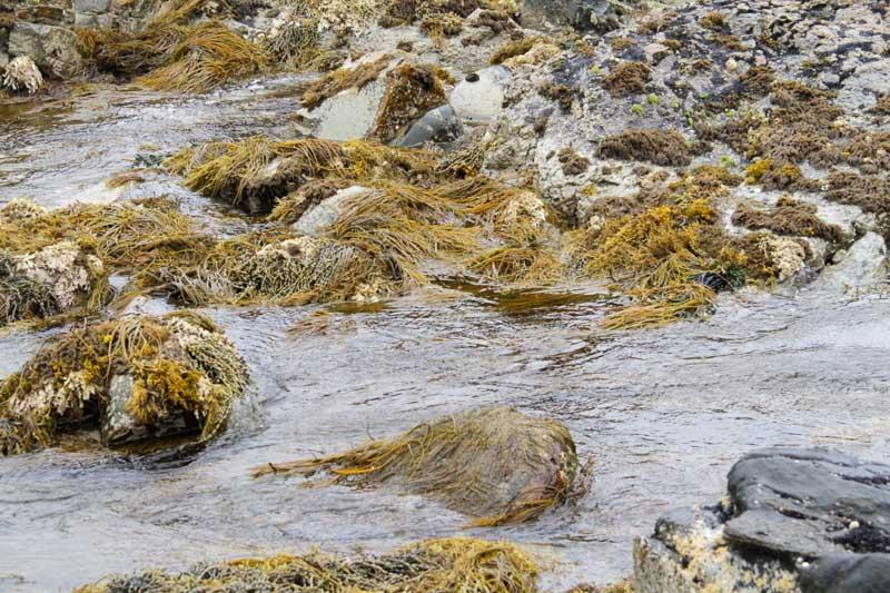 20151122-4_seaweeds.jpg