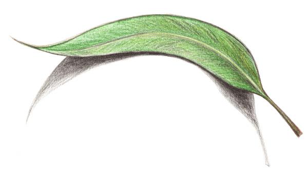 leaf-small.jpg
