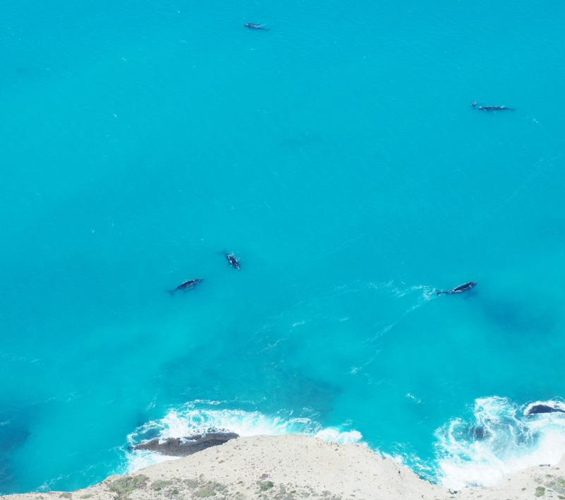 whales-gab.jpg