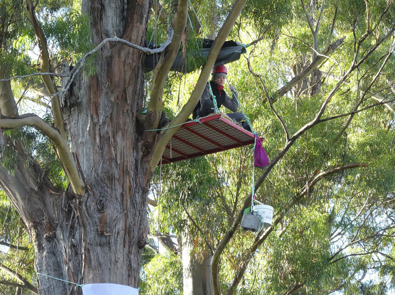 Lisa-Searle-in-Frankland-River-canopy-vigil---21.2.17-small.jpg