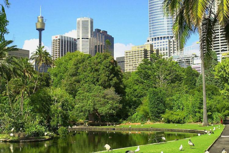 green-sydney.jpg