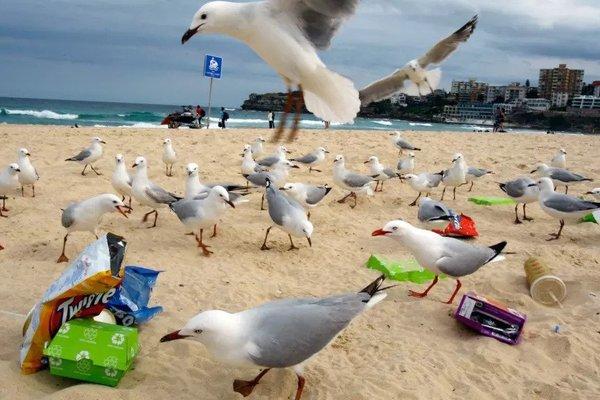 seagulls_litter.jpg