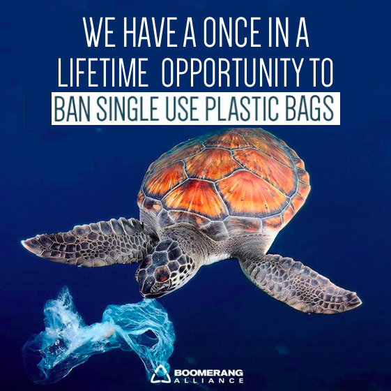 Plastic_bag_ban.png