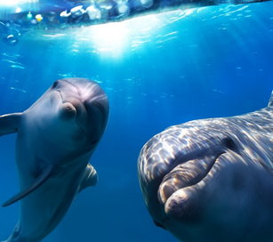 rsz_happy-dolphins_thumbnail.jpg